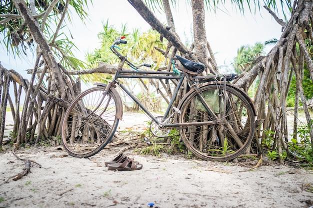 Bicicleta en árbol de playa