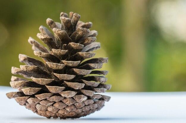 Big pine cones en el piso blanco en el fondo de blur green en el bosque