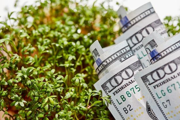 Billete de dólar americano sobre fondo verde natural.