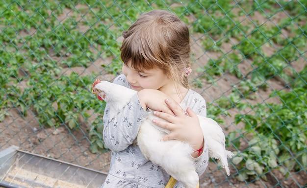 Bio pollos en una granja casera niños.
