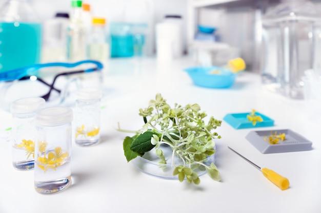 Biología de plantas, análisis de muestra en laboratorio de investigación.