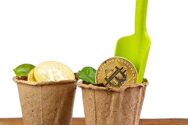 Bitcoin dorado y planta verde en suelo.