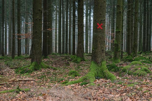 Blanco rojo en un árbol en el bosque
