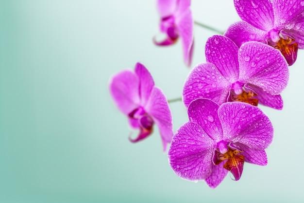 Blooming flores de orquídeas violetas sobre fondo borroso