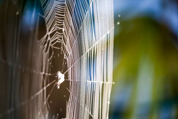 Blur spiders web para manipular para atrapar a la presa en un árbol en el jardín