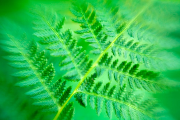 Blurry bracken fern