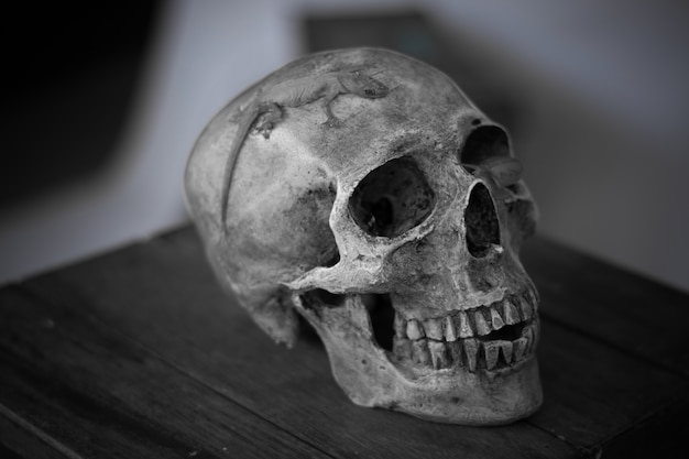 Bodegón de cráneo humano, concepto de halloween, primer plano de cráneo estilo de vida
