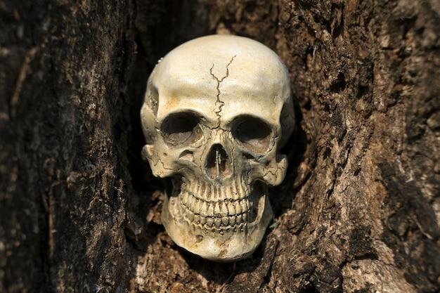 Bodegón de cráneo humano en corteza de árbol