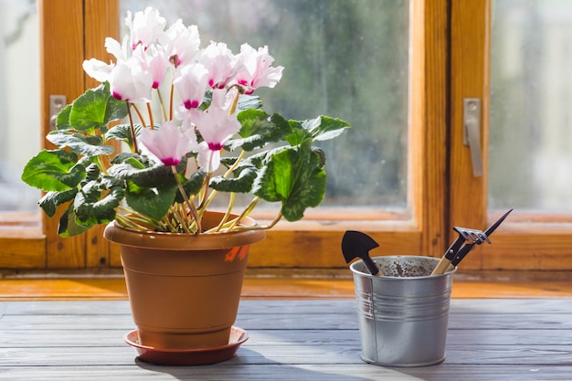 Bodegón de planta y jardín