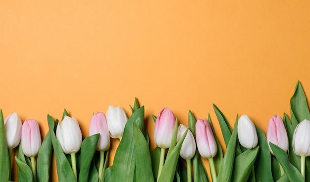 Bodegón primavera suaves tulipanes blancos y rosados