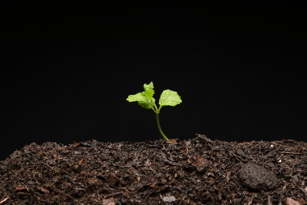 Bodegón de semillero creciendo