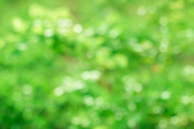 Bokeh de las hojas de los árboles para el fondo de la naturaleza y guardar el concepto verde, suave y borroso fuera de foco