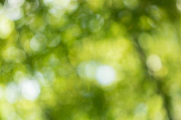 Bokeh de hojas de árboles para el fondo de la naturaleza y guardar el concepto verde