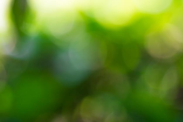 Bokeh de hojas de los árboles para el fondo de la naturaleza