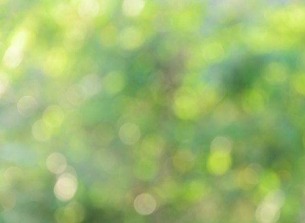 Bokeh naturaleza verde
