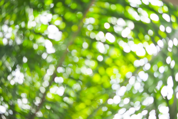 Bokeh verde abstracto fuera de foco de fondo del árbol en la naturaleza