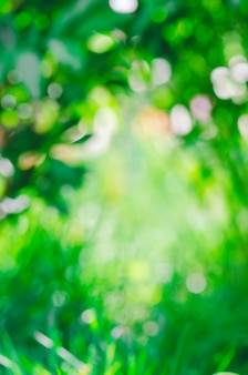 Bokeh verde fuera de foco follaje.
