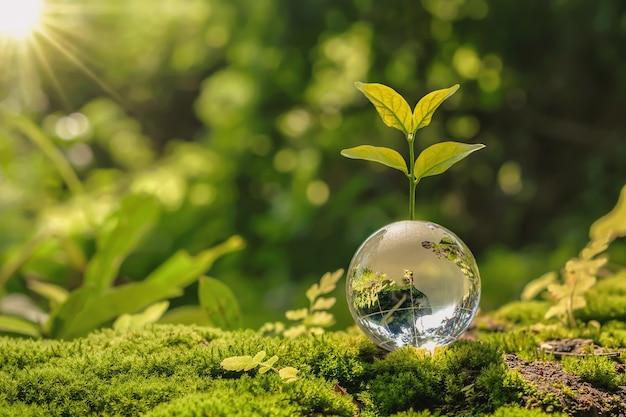 Bola de globo de chica con crecimiento de árboles y naturaleza verde