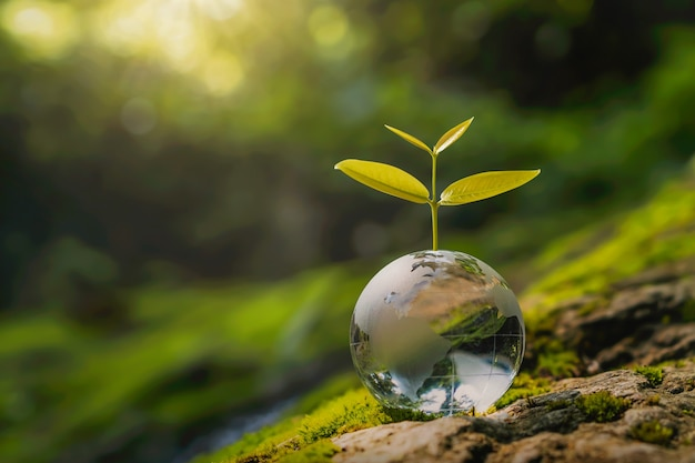Bola de globo de cristal con árboles que crecen y naturaleza verde