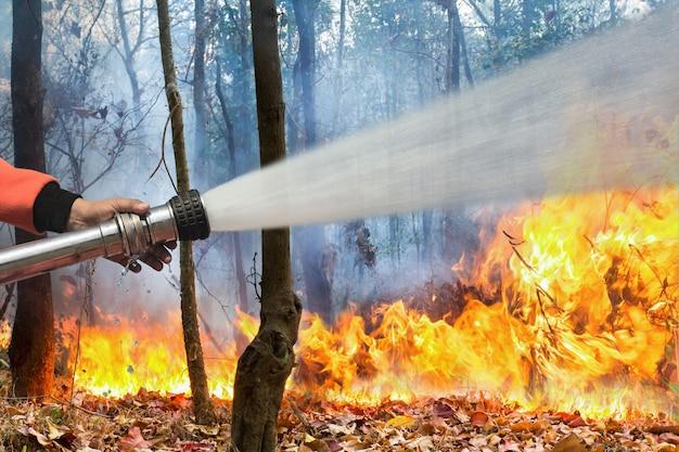 Los bomberos rocían agua a los incendios forestales