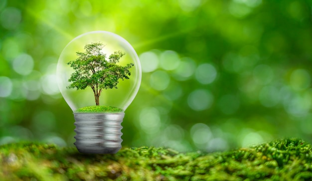 La bombilla se encuentra en el interior con hojas de bosque y los árboles están a la luz. conceptos de conservación del medio ambiente y planta de calentamiento global que crece dentro de la bombilla sobre seco