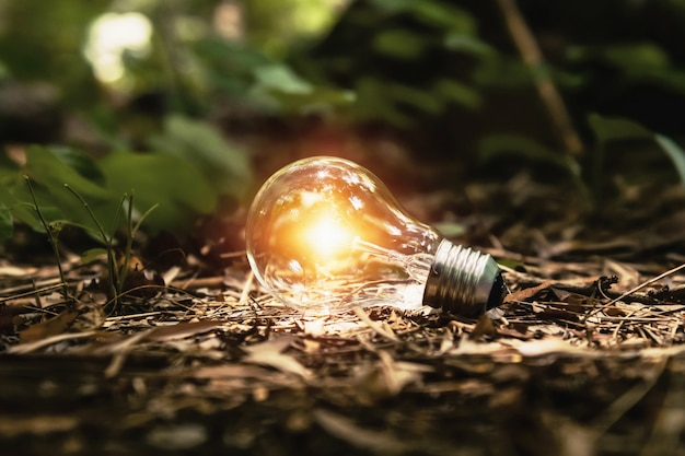 Bombilla de luz en el suelo con sol en el bosque. concepto de energía limpia