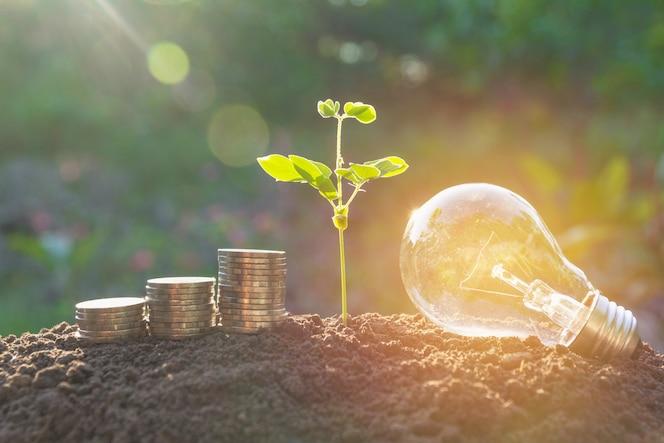 Bombilla y árbol de ahorro de energía que crecen en las pilas de monedas en fondo de la naturaleza.
