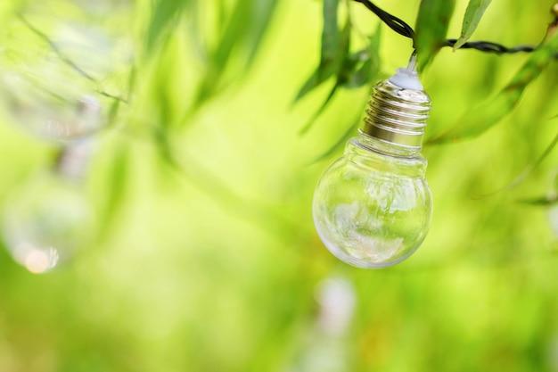 Las bombillas cuelgan de las ramas