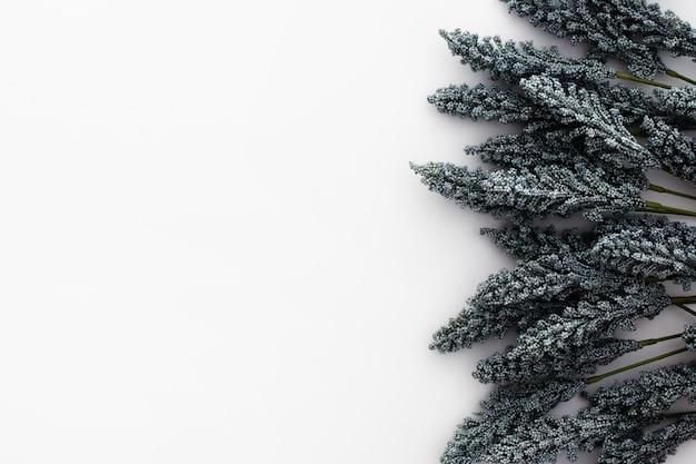 Bonita composición hecha con hojas de trigo sobre fondo blanco.