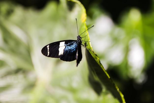 Bonita mariposa posada en una hoja verde en el jardín
