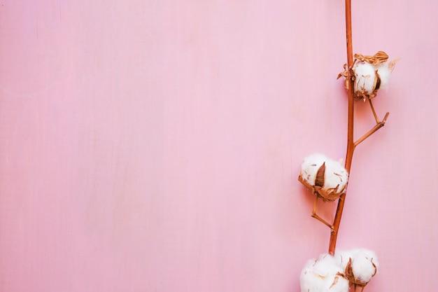 Bonita ramita de algodón