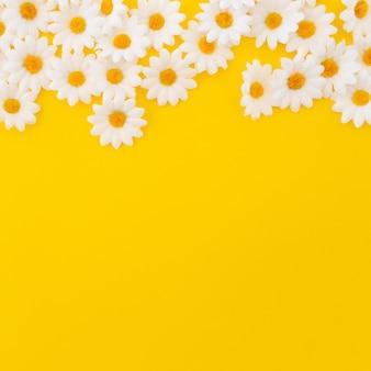 Bonitas margaritas sobre fondo amarillo con copyspace en la parte inferior