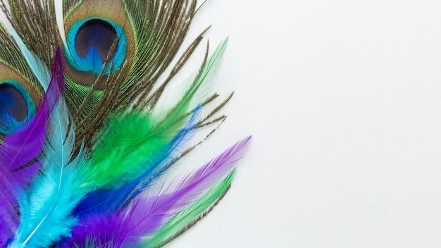 Bonitas plumas de pavo real con espacio de copia