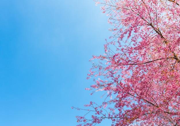 Bonito árbol en flor
