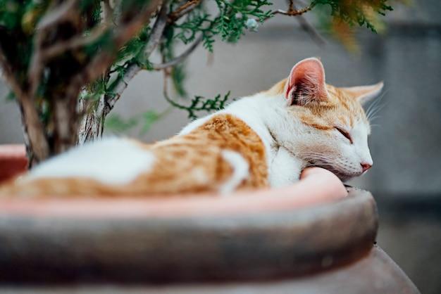 Bonito gato en el jardín