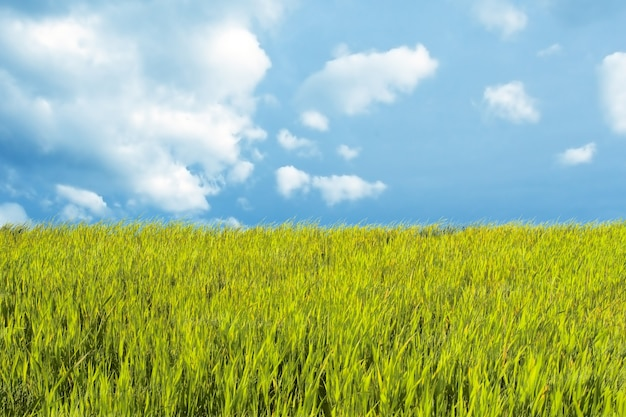 Bonito paisaje con el prado y el cielo