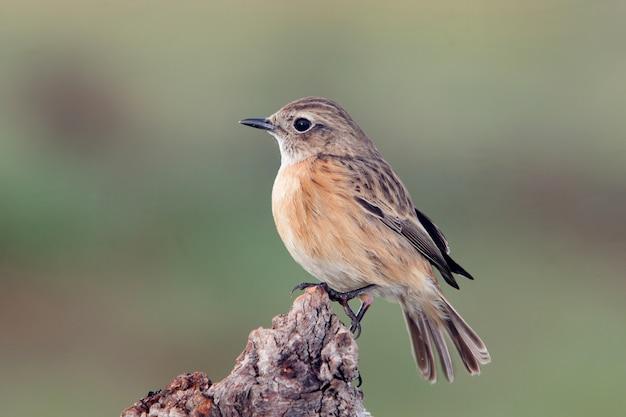 Bonito pájaro en un baúl de posadero con