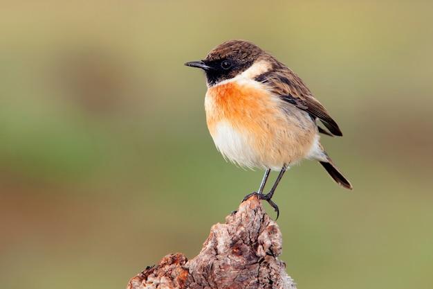 Bonito pájaro en un tronco posadero