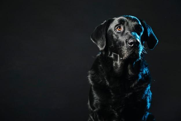 Bonito perro en negro