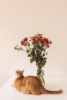 Bonito ramo de rosas rojas y gato rojo en un jarrón contra la pared blanca