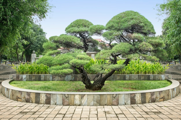 Bonsai en el parque