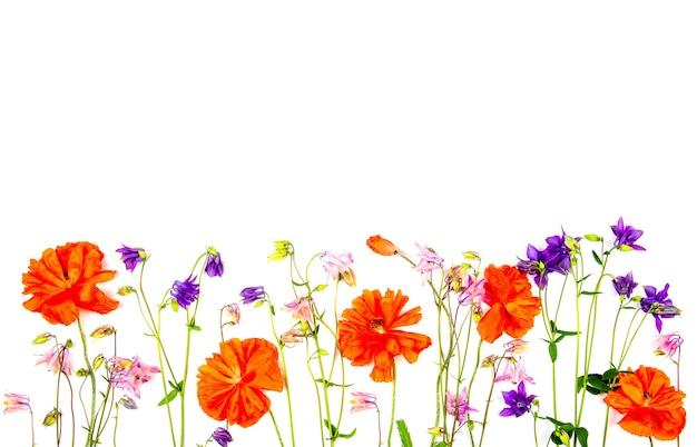 Borde floral de flores de aquilegia y amapolas rojas aislado sobre un fondo blanco con espacio de copia