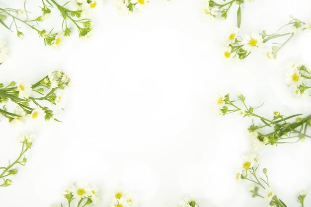 Borde hecho de margaritas flores blancas