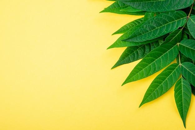 Borde de marco abstracto de hojas verdes tropicales en amarillo
