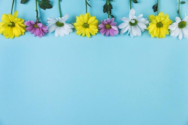 Borde superior hecho con flores de manzanilla sobre fondo azul
