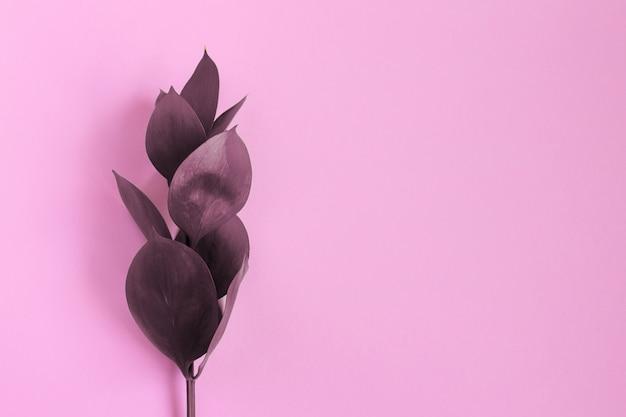 Borgoña deja sobre un fondo rosa
