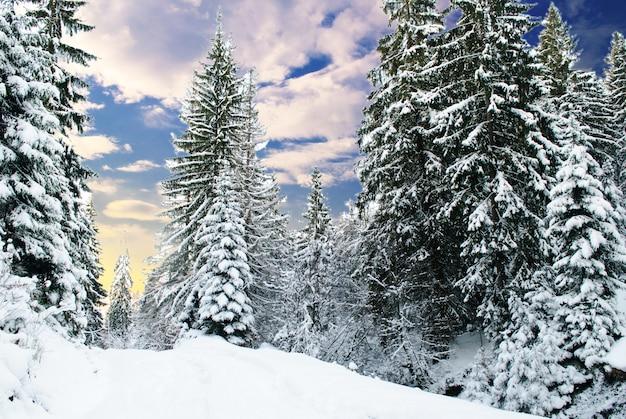 Bosque de abetos de invierno con árboles cubiertos de nieve y camino