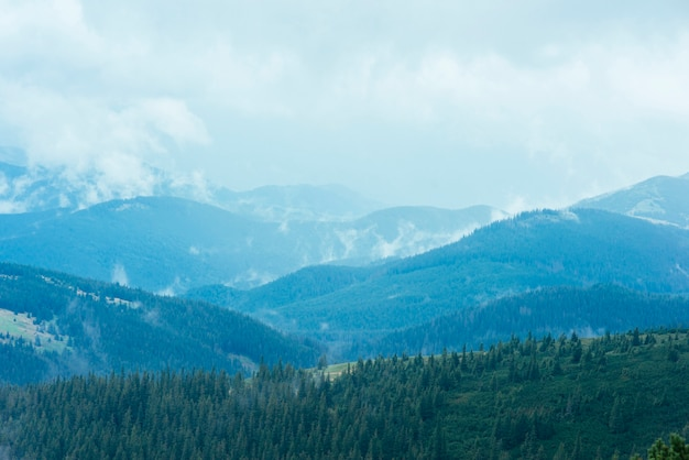 Bosque de abetos en las verdes montañas