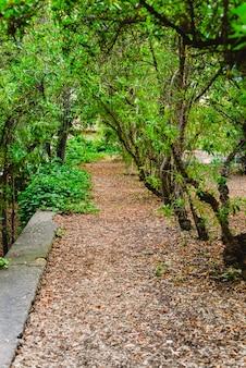 Bosque al atardecer con colores cálidos del verano