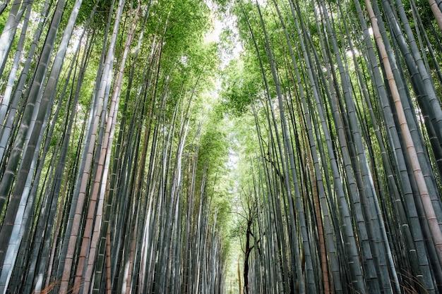 Bosque de arboledas de bambú de arashiyama en japón
